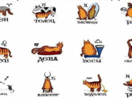 Принципы знаков зодиака