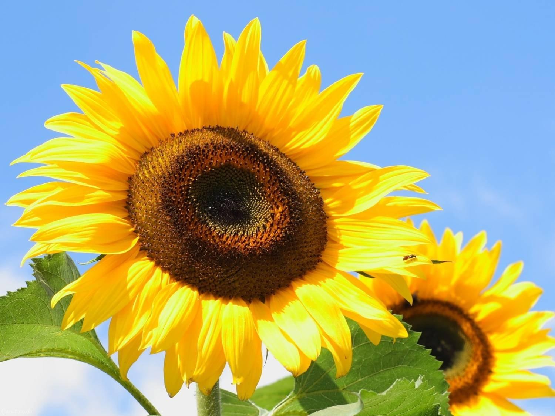 Кельтский цветочный гороскоп! Узнай какой цветок покровительствует тебе!