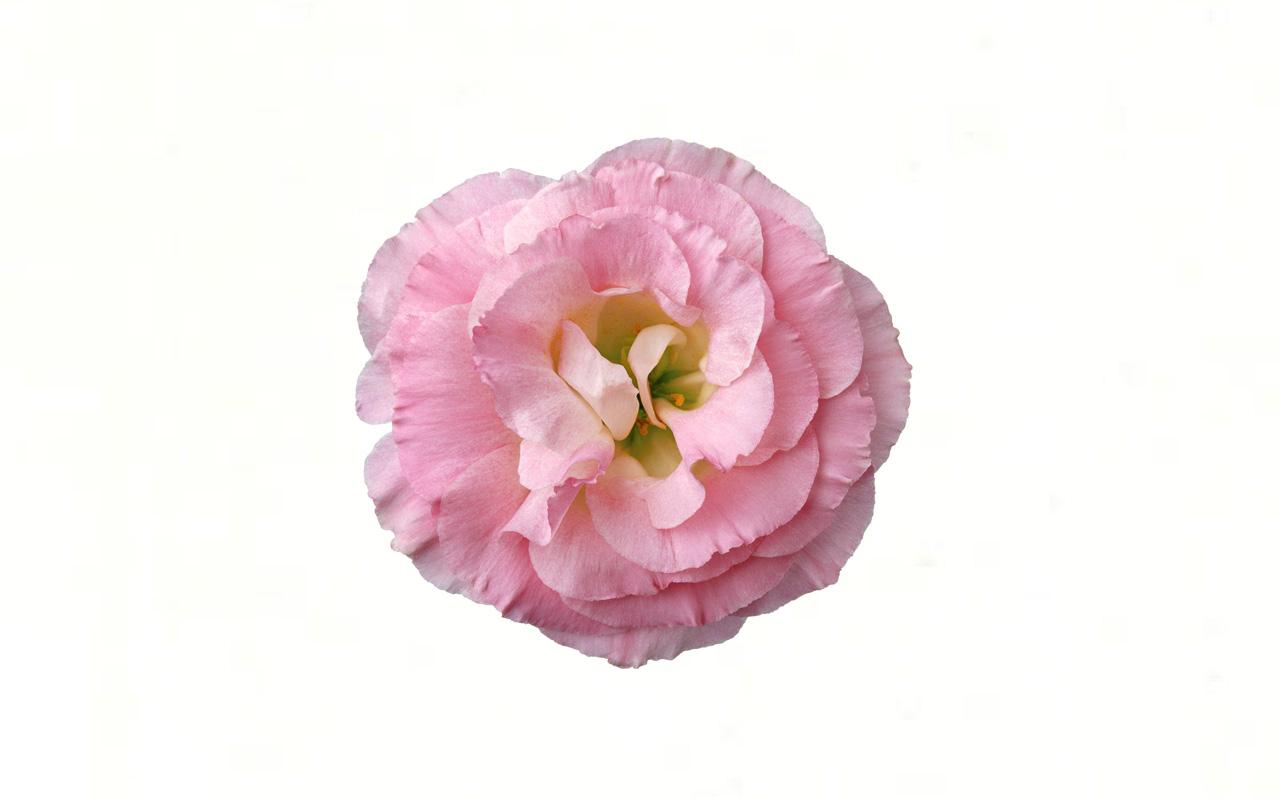 Выберите цветок и узнайте тайны вашей женственности