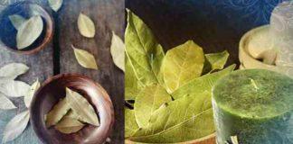 Лавровые листы — магнитики денег и фортуны