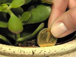 Трюк, который обязательно поможет привлечь деньги в дом