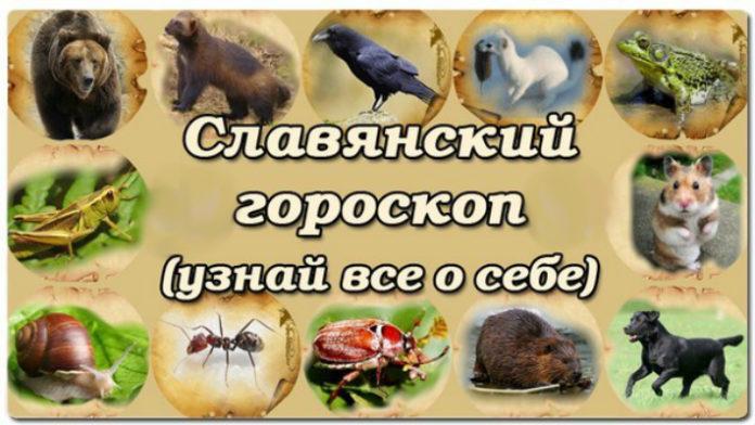 slavyanskij-goroskop-zhivotnyx