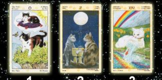 Выберите карту таро Мудрого кота и узнайте ответ на волнующий вопрос