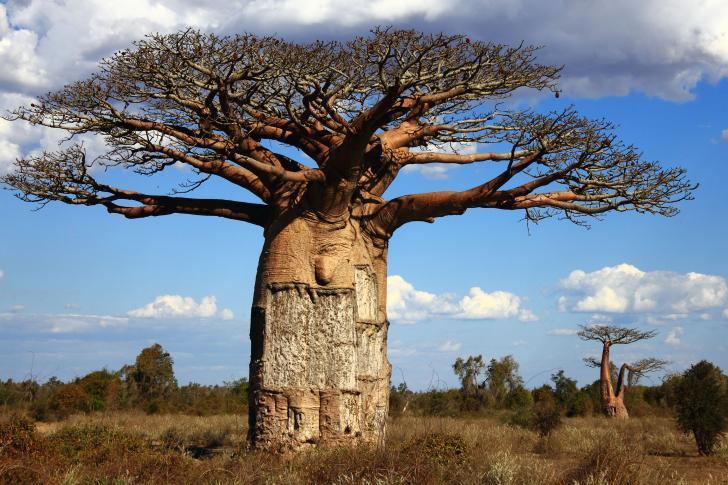 Точной гороскоп по африканской астрологии