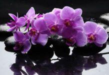 Орхидея в доме — к неприятностям Источник: https://brightgood.life/