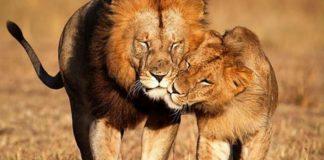 18 фото влюбленных животных , от которых мимиметр зашкаливает