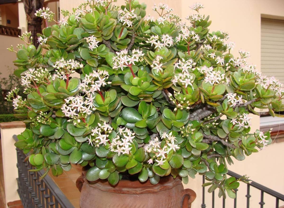 Роща тропических растений в гаграх фото усадьбе